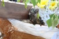 Bild Holzstamm sägen